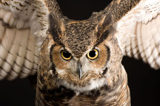 Owls and Apologies: More Nowak and Peterson